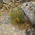 it_2009_09_164