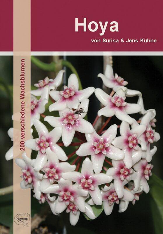 Hoya thailandica und neues vom angekündigten Hoyabuch