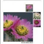 Kakteen-Haage Katalog 2011