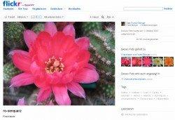 Chamaecereus Rosenquarz von Frank Ebinger - auf flickr
