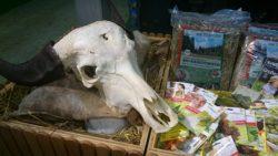 Bio Produkte aus Thüringen - der Büffel hat mich verwundert - aber ja, die stehen in Thüringen auf der Weide - ganzjährig!