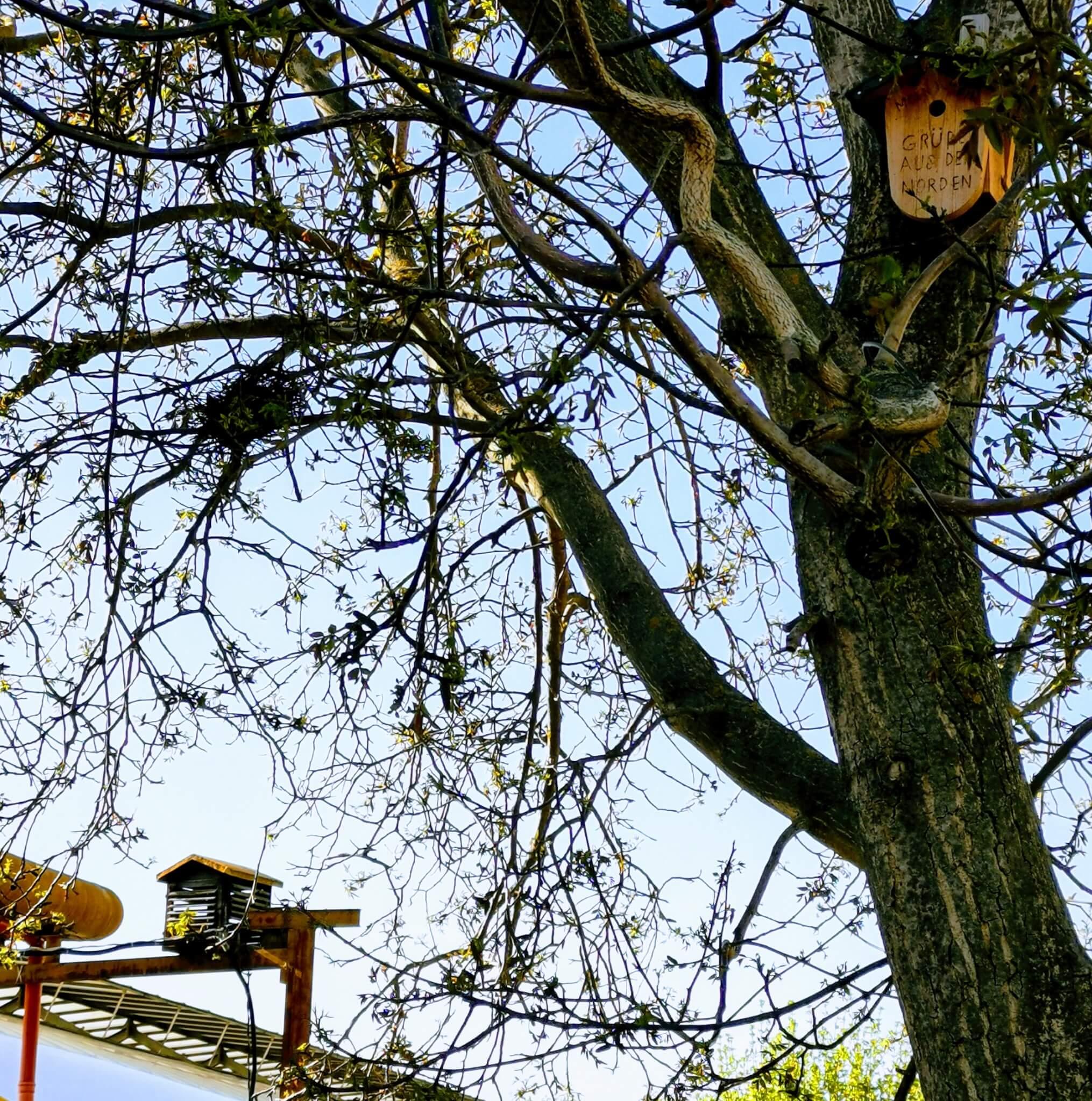 Vogelhäuschen im Walnussbaum von der Nordsee